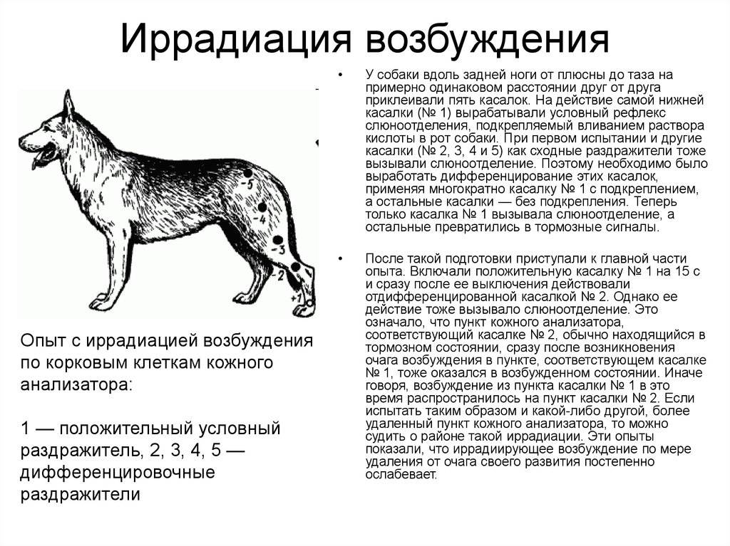 Вязка (случка) собак: признаки готовности, подготовка, процесс