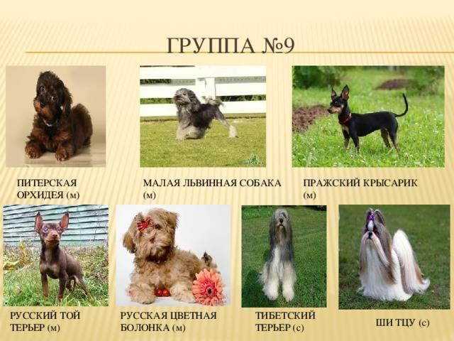 Классификация по использованию. происхождение собак и их породная классификация