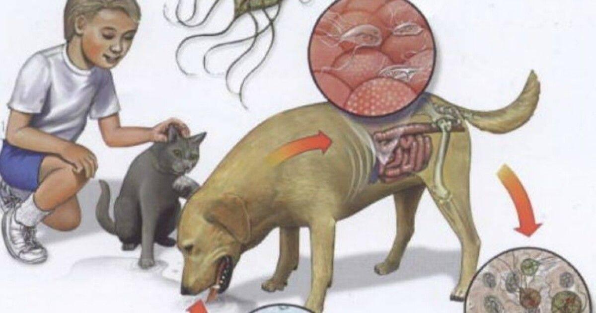 Паразиты желудочно-кишечного тракта у кошек.