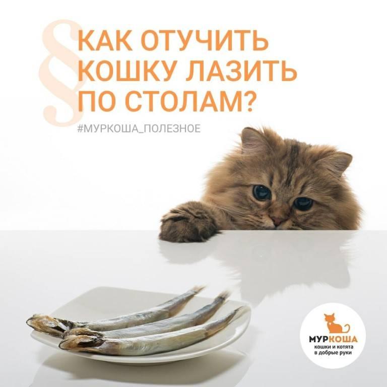 Как отучить кота лазить по столам. советы эксперта