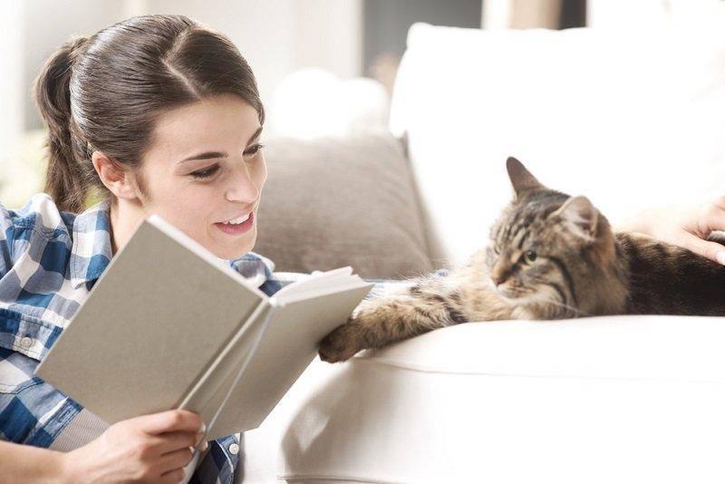 Дрессировка кошек: команды и методика обучения трюкам