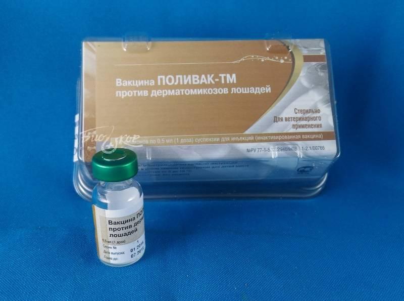 Поливак-тм: вакцина, защищающая котов от лишая