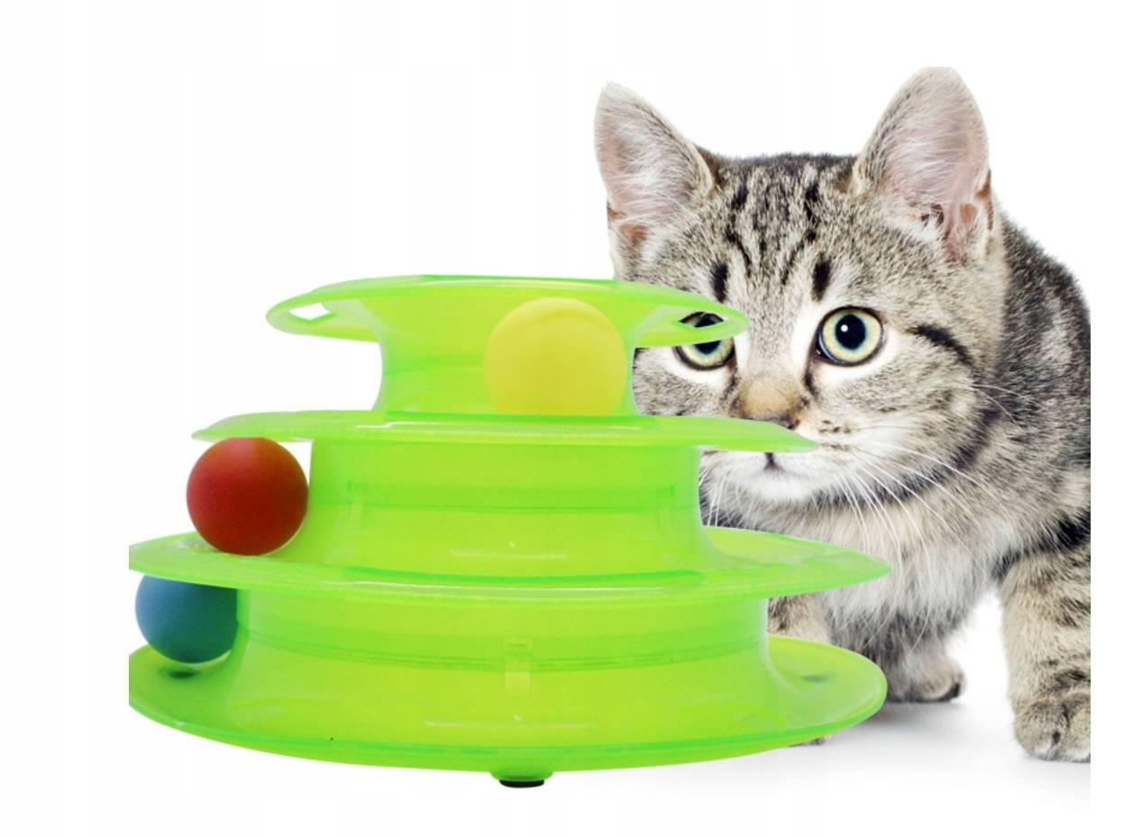 Самые умные породы кошек - топ 10 с фото, названиями, критерии оценки