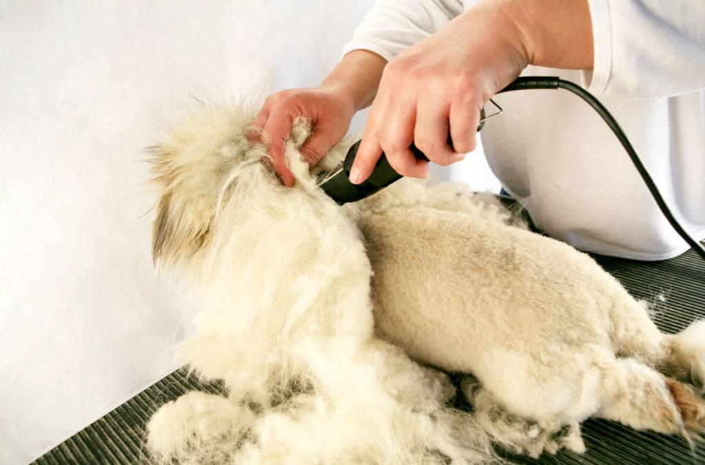 Груминг для котов: особенности процедуры, виды стрижек