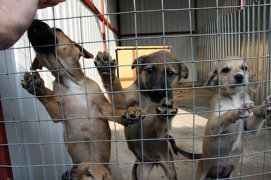 Как взять собаку из приюта и где находятся учреждения для бездомных питомцев