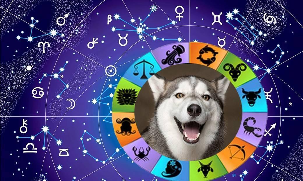 Тотемное животное по знаку зодиака - как определить