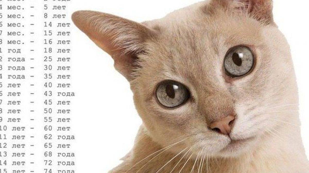 Кошки-долгожители. породы, которые надо выбирать, чтобы питомец прожил долго. топ-10 | котопёскин | яндекс дзен