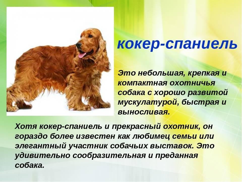 Породы собак, похожие на таксу: внешний вид и особенности характера + какие существуют разновидности такс?