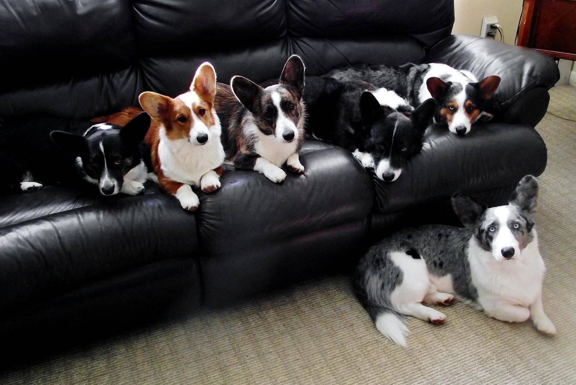 Какие породы собак вообще не подходят для квартир