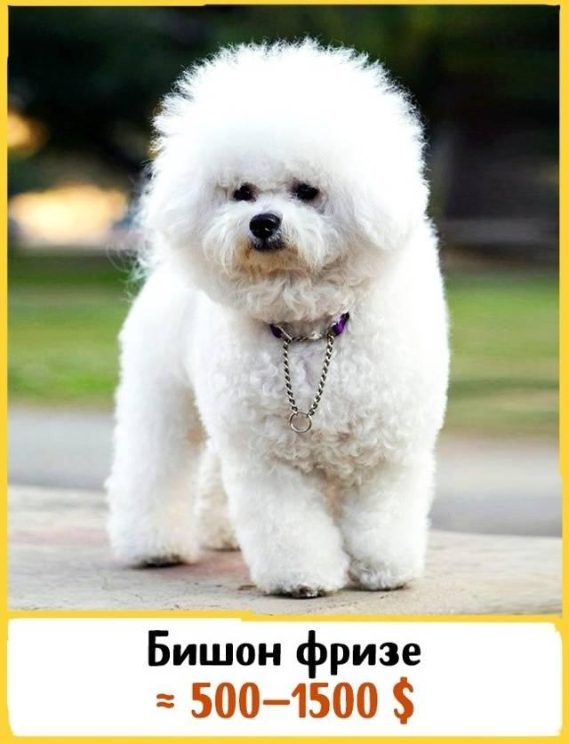 Самые милые собачки в мире: топ-10 с фото и описанием