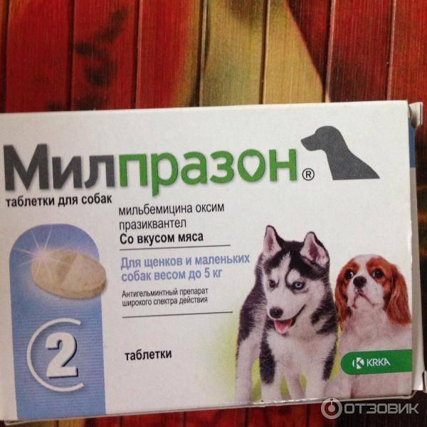 На какой день после глистогонки прививать собаку?