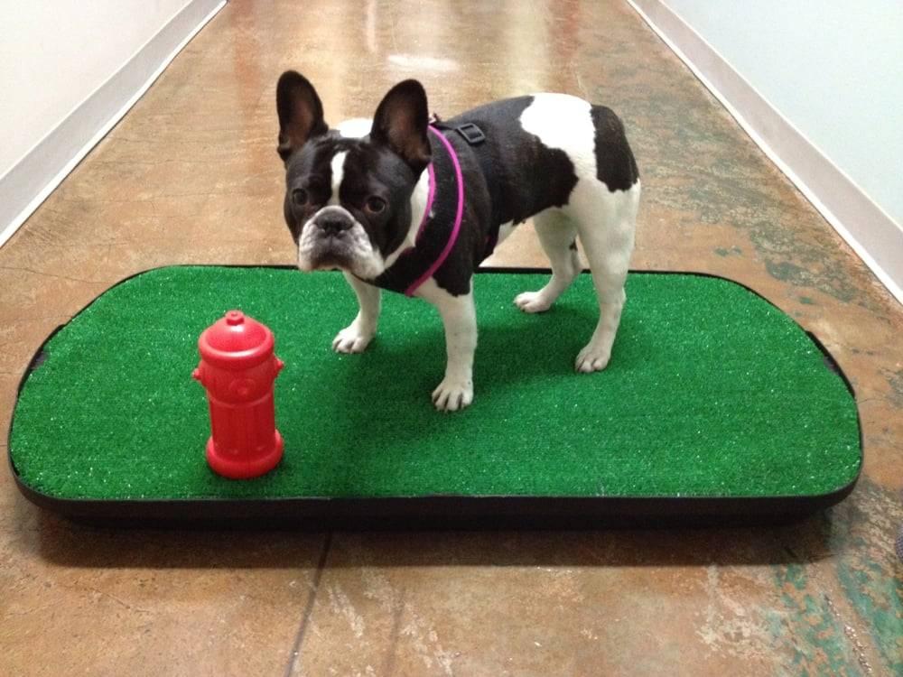 Как приучить собаку ходить в туалет в лоток: взрослую или щенка, можно ли научить ходить в квартире после пелёнки, к кошачьему с наполнителем