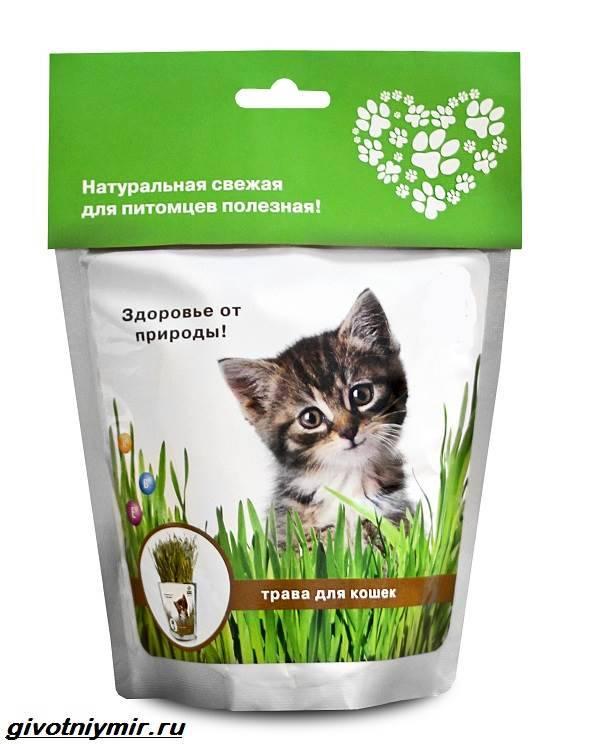 Нужна ли трава кошкам: какую травку любят и зачем ее едят, как посадить