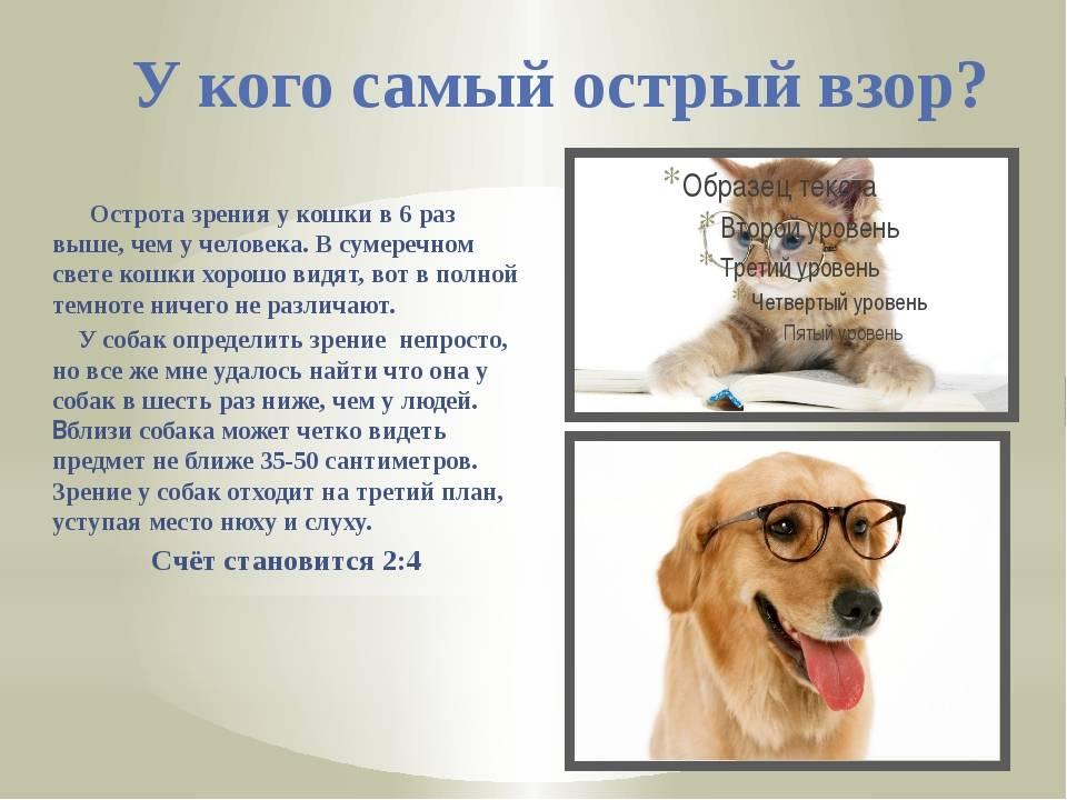 Глаза и зрение собаки: особенности и строение | все о собаках