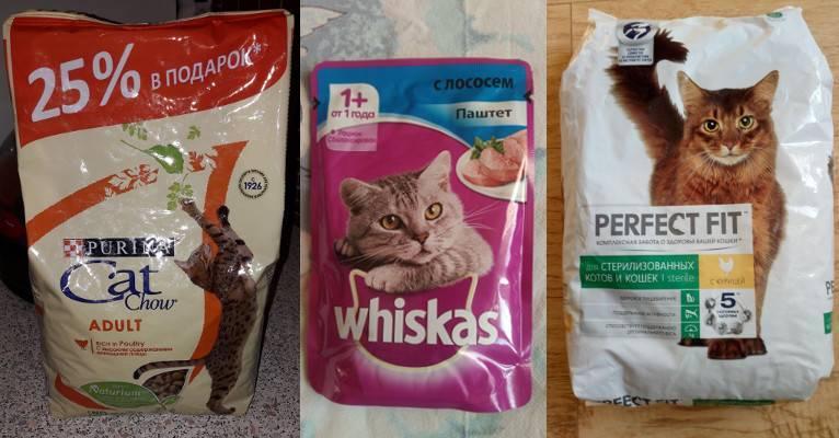 Корма для кошек: виды, классы, отзывы