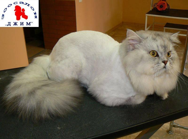 Можно ли стричь котов: зачем нужна стрижка, вред
