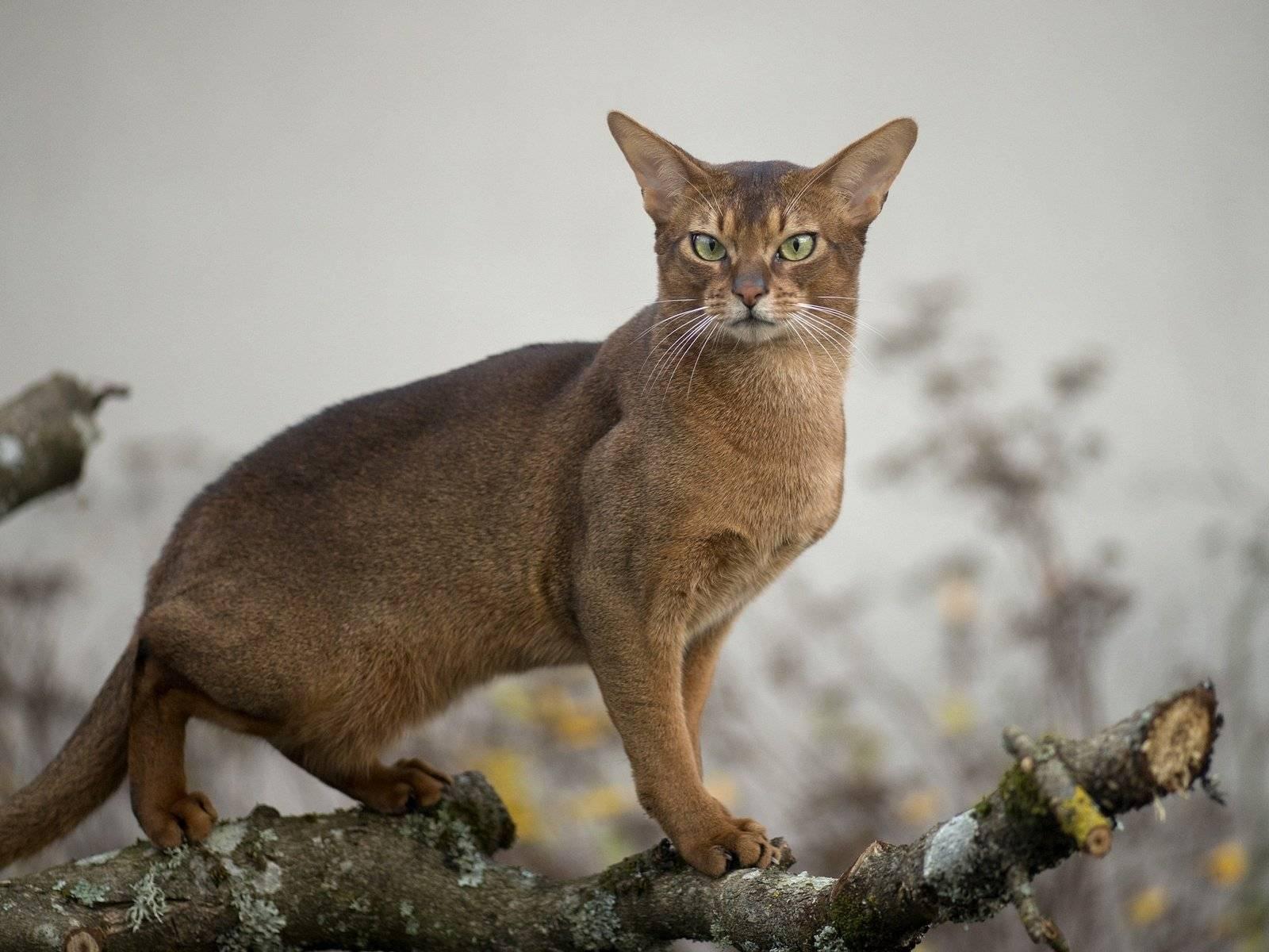 «ласковый, несмотря на габариты» — как пензенская семья приютила котенка пумы из контактного зоопарка —  такие дела