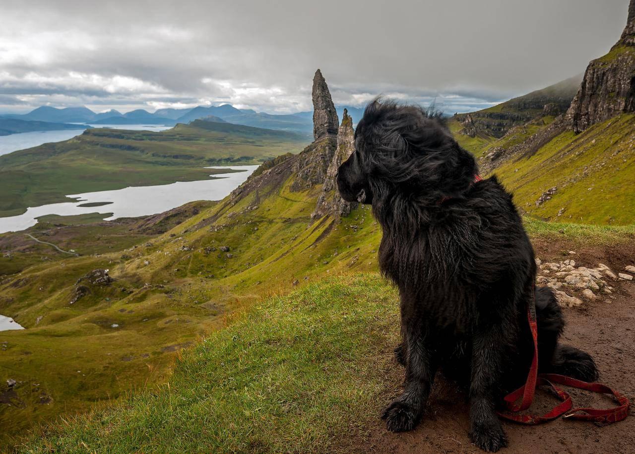 Собака водолаз: описание породы, основные качества и рекомендации по содержанию