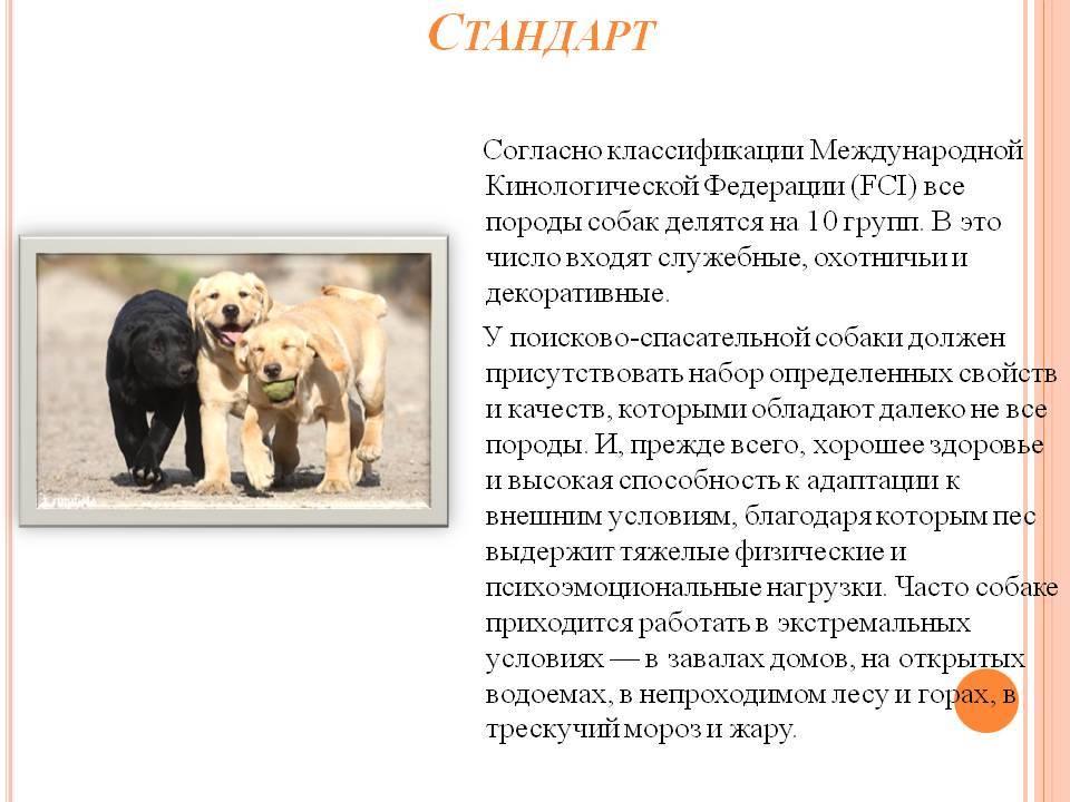Пастушьи и скотогонные собаки. классификация мкф (fci)