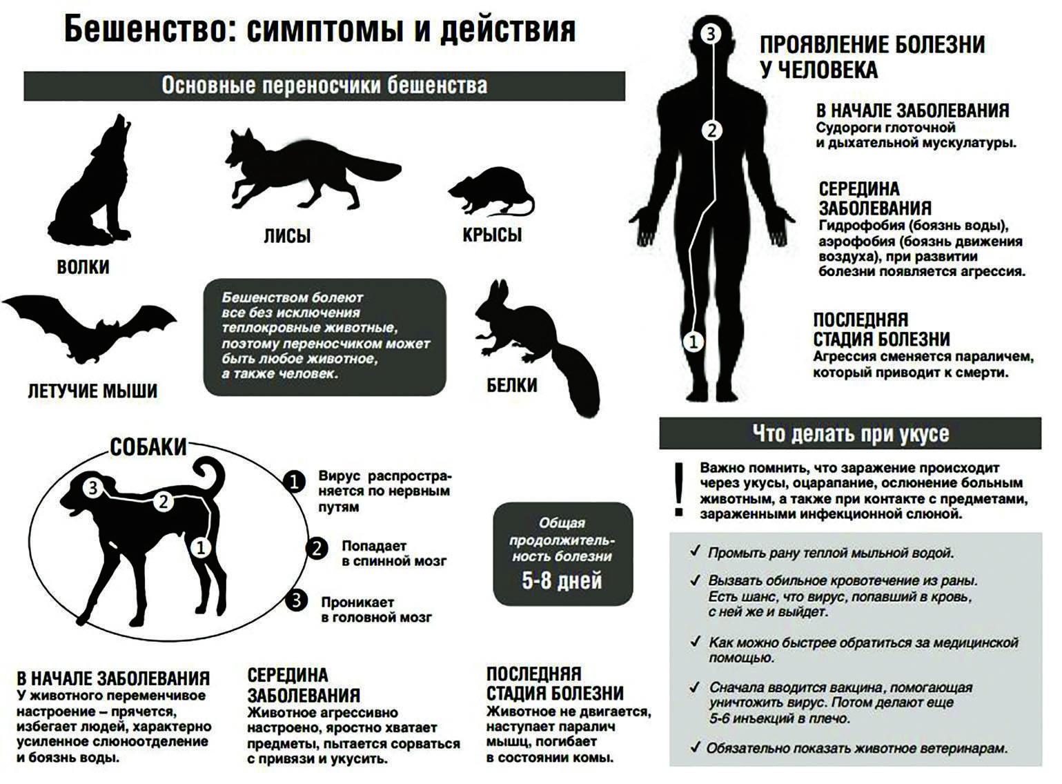 Бешенство у собак: симптомы, признаки заболевания, лечение и прививки