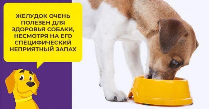 Можно ли собаке молоко и молочные продукты: взрослой, щенку