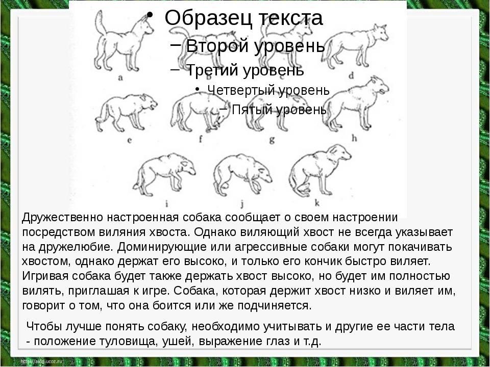 Понимают ли собаки человеческую речь