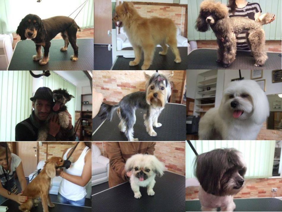 Как подстричь злую собаку в домашних условиях