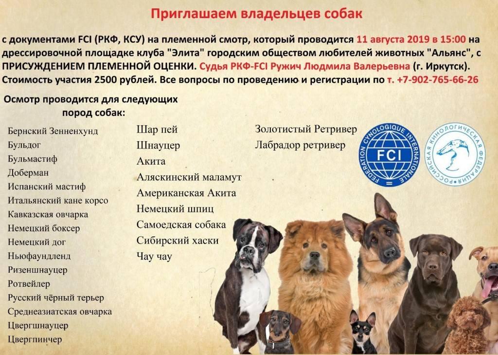 Классы, оценки и сертификаты  на выставках собак