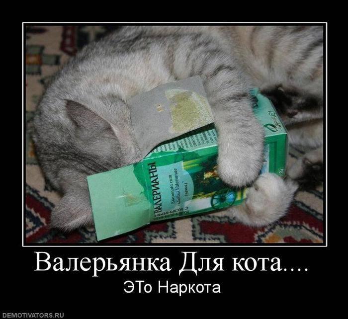 Почему коты любят валериану и можно ли ее давать?