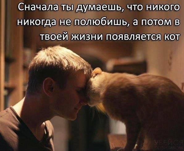 15 вещей, которые кошки не любят, но не могут об этом сказать  - gawp.ru
