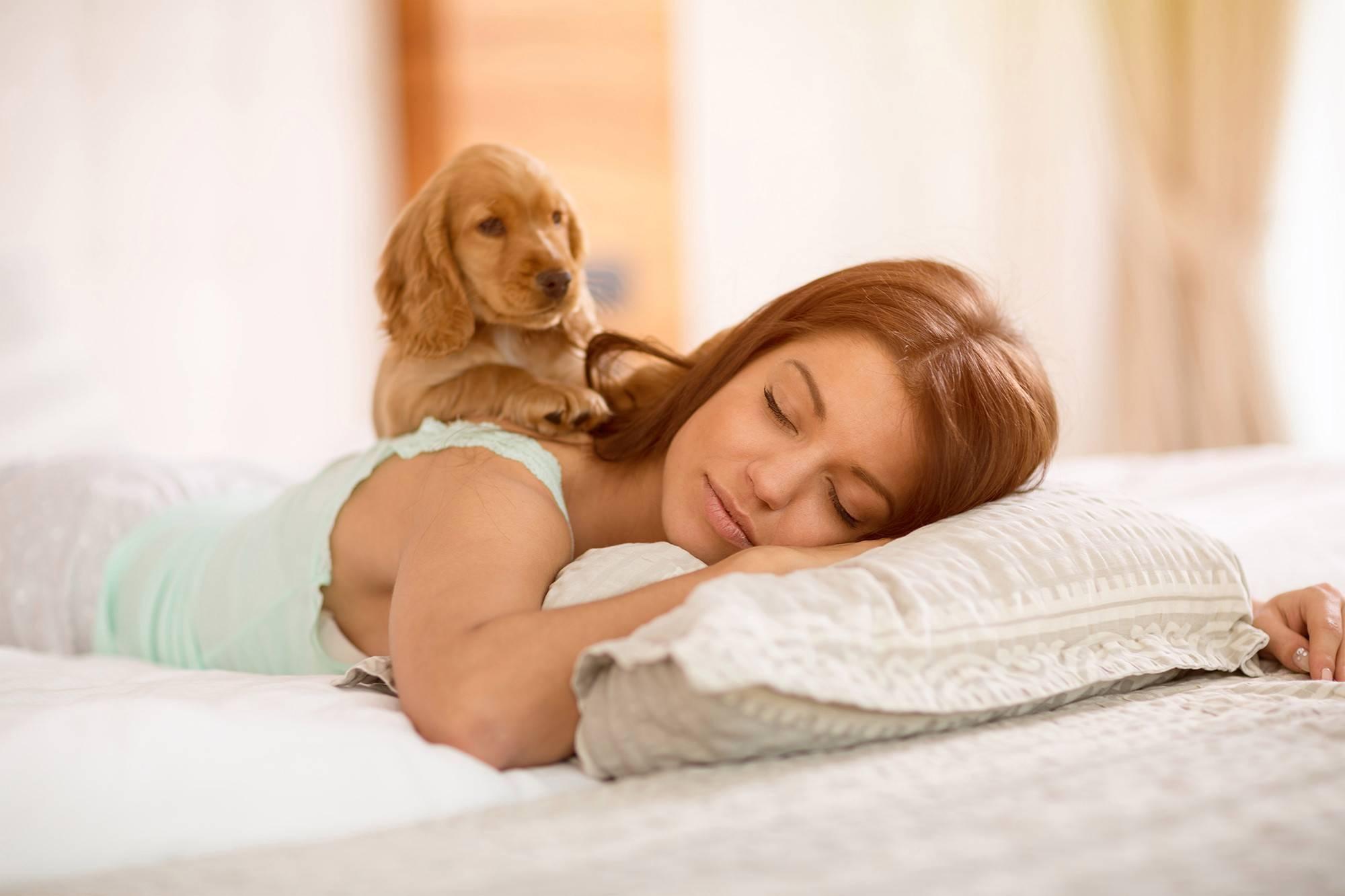 """Как приучить щенка спать ночью   блог ветклиники """"беланта"""""""