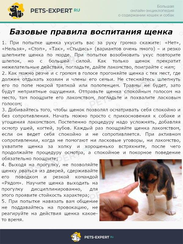 Можно ли с собакой гулять после первой прививки? - отвечает  ветврач