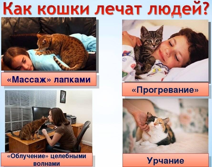 Почему нельзя целовать кошек и понимают ли они поцелуи