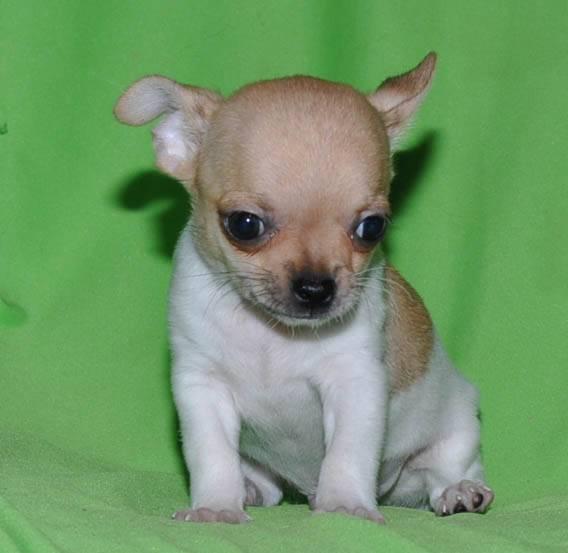 Как назвать щенка мальчика * подобрать имя или кличку для собаки
