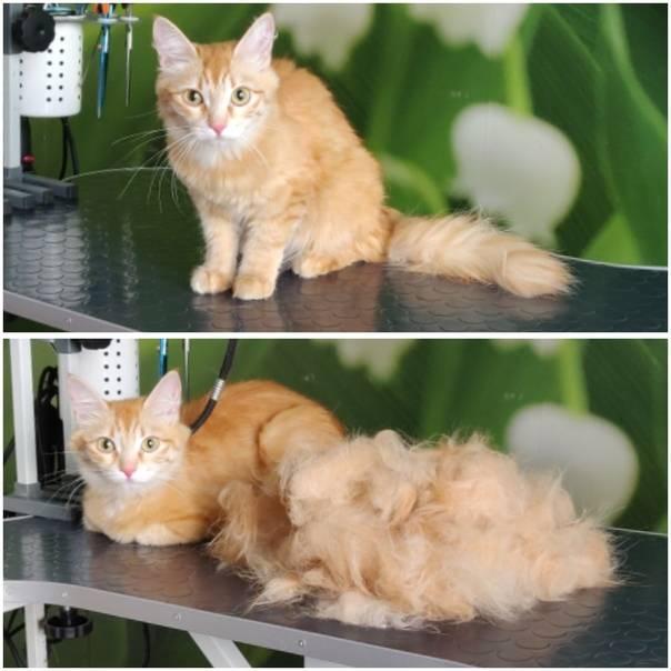 Экспресс-линька собак и кошек