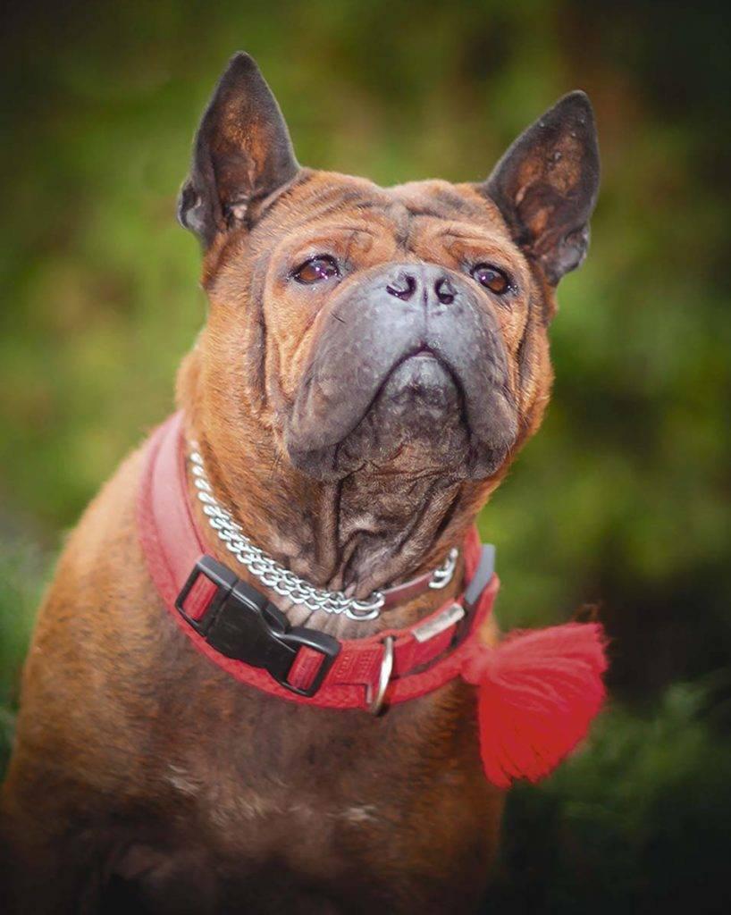 Самые редкие породы собак в мире и их особенности