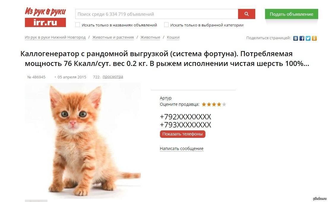 Как продать котят быстро: на что обратить внимание