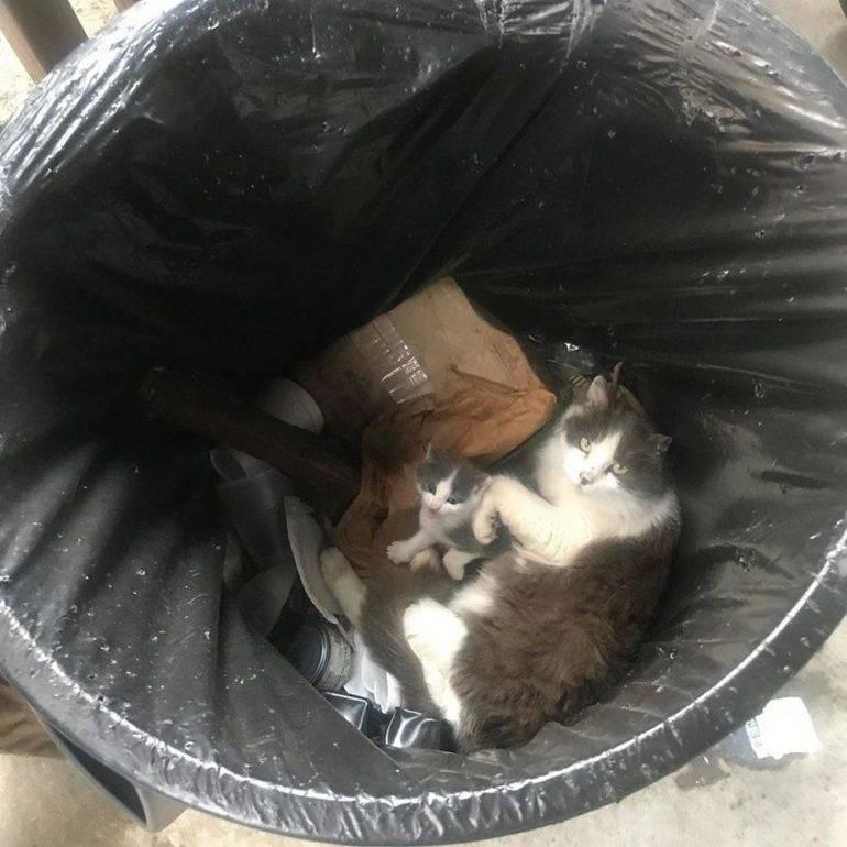 Если кот съел пакет: что делать и нужно ли беспокоиться | кот и кошка