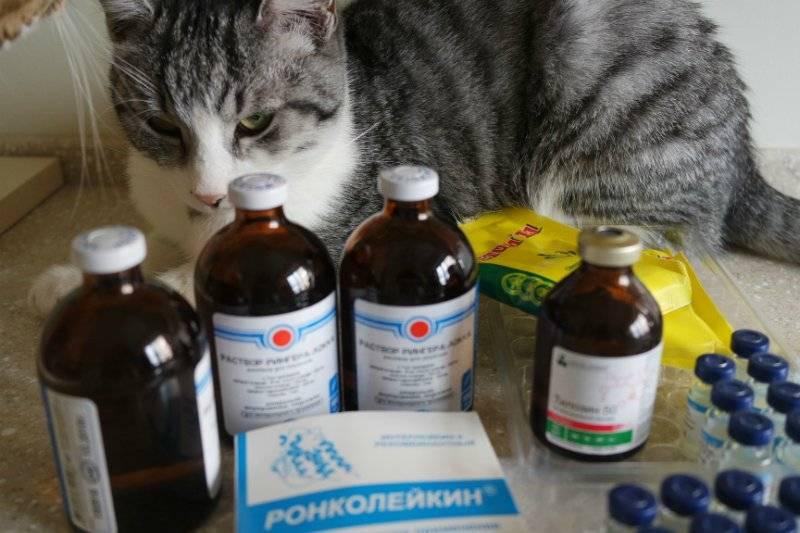 Как вылечить понос у котенка самостоятельно
