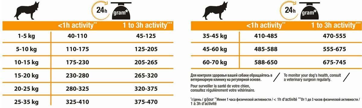 Как кормить щенка в возрасте 7-9 месяцев