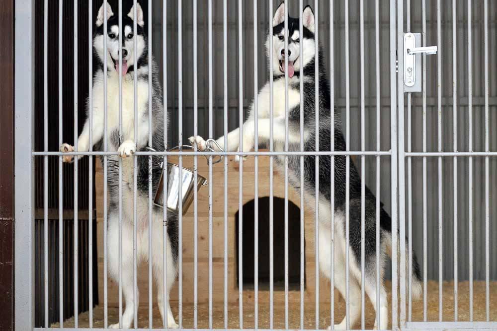 Хаски - уход и содержание в частном доме | собачий блог