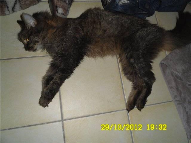 Заболевания почек у кошек собак | фитоэлита здоровые почки