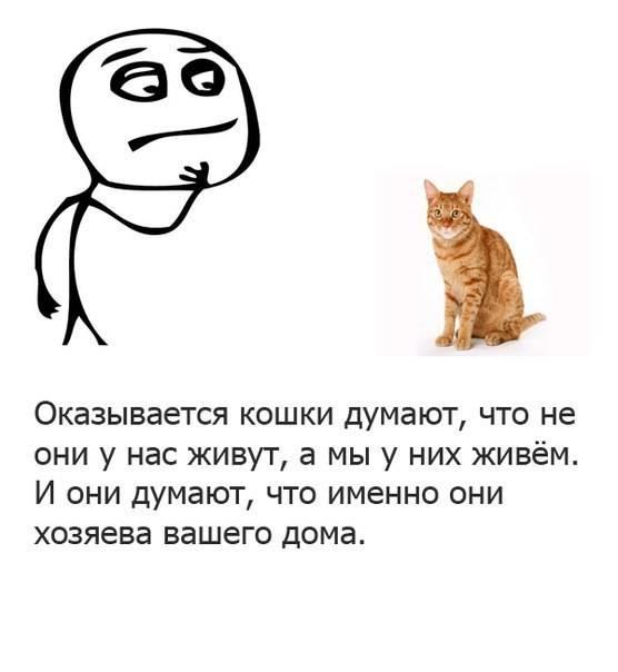 О чем думают кошки: мысли о своих хозяевах