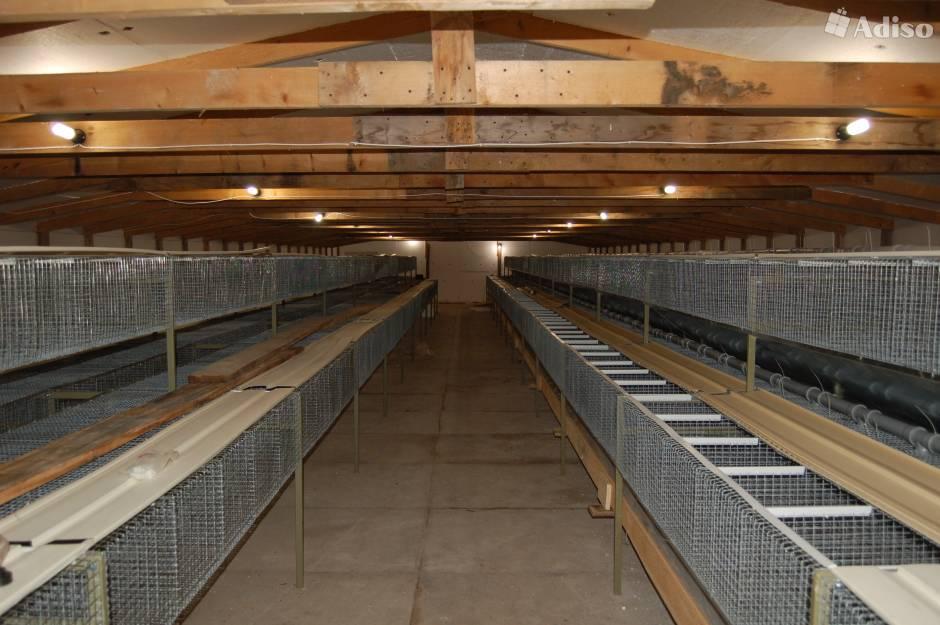 Кроличья ферма для кролиководства своими руками