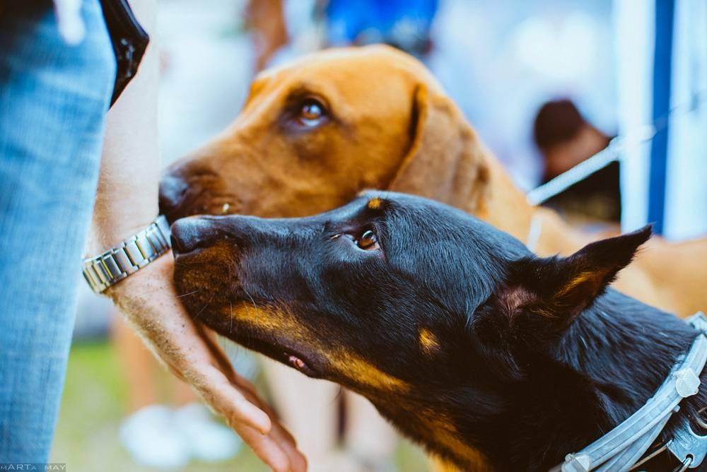 7 советов, как продлить жизнь своей собаки