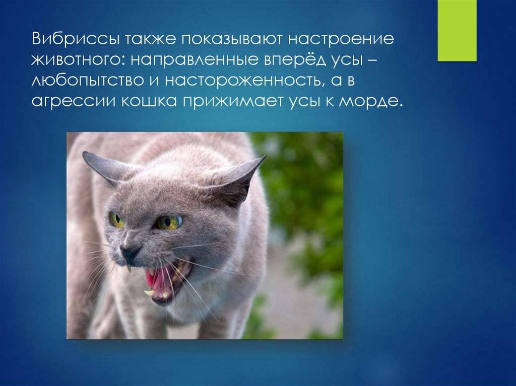 Агрессия у кошек и собак