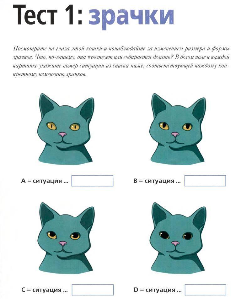 Кошачий язык: способы общения, переводчик, как понять кошку