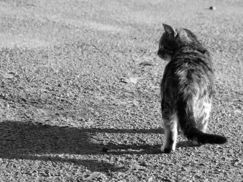 Почему кошки уходят умирать из дома предчувствуя свою кончину