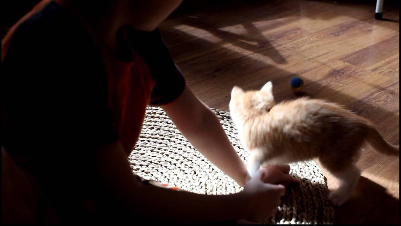 Как отучить котенка кусаться и царапаться: 4 эффективные меры, причины плохого поведения, как избежать ошибок в воспитании
