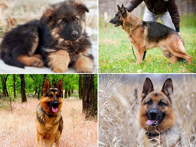 Немецкие клички для собак